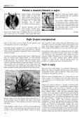 Sauilo 05/2005 (Austró) - ASATRU - Page 6