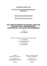 cultures intensives de microalgues sur lisier de porc - Accueil ...