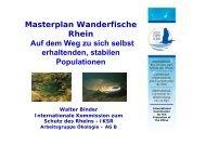 Masterplan Wanderfische Rhein Auf dem Weg zu sich selbst - IKSR