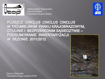 Pluszcz (Cinclus cinclus cinclus) w Trójmiejskim Parku ...