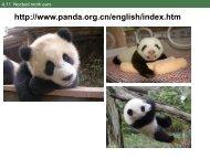 http://www.panda.org.cn/english/index.htm
