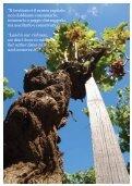 Gulfi Wine & Resort brochure - Azienda Agricola Gulfi - Page 6