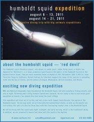 BigAnimals Humboldt Squid expedition - Big Animals Expeditions