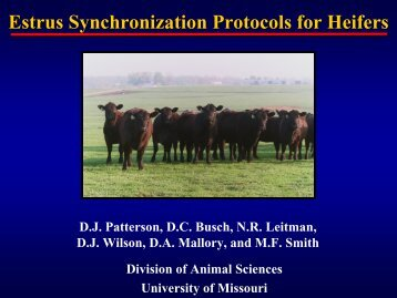 Estrus Synchronization Protocols for Heifers