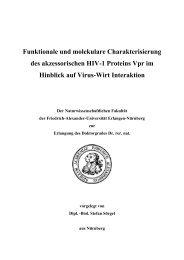 Funktionale und molekulare Charakterisierung des akzessorischen ...