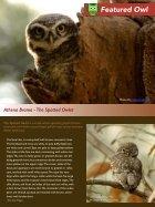 owl_eye_001.pdf - Page 2