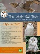 owl_eye_001.pdf - Page 5