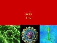 บทที่ 8 ไวรัส