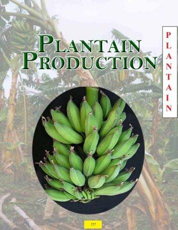 Plantain - Guyana Marketing Corporation
