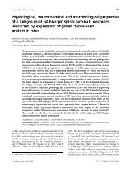 Physiological, neurochemical and morphological properties of a ...