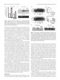 Brain-Derived Neurotrophic Factor Activation of NFAT (Nuclear ... - Page 6