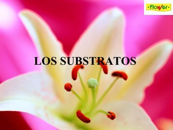 LOS SUBSTRATOS