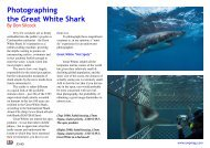Photographing the Great White Shark