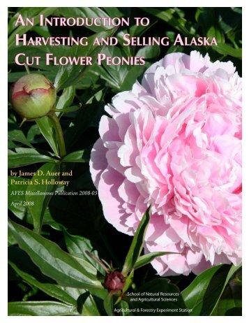 An In Ha Selling Alaska Cu Flower Peonies