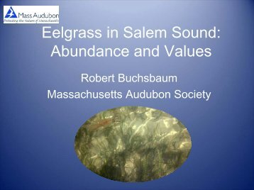 Eelgrass in Salem Sound Abundance and Values