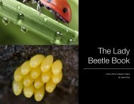 The Lady Beetle Book