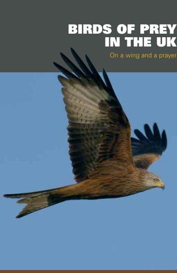 BIRDS OF PREY IN THE UK