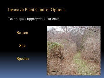 Invasive Plant Control Options - Rhode Island Land and Water ...