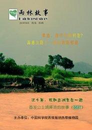 雨 林 故 事