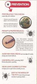 Understanding Lyme Disease - Page 6