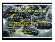 Chapter 3 Fossils and the diversity of life