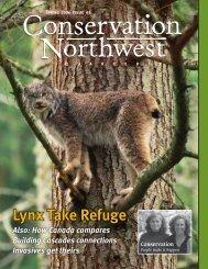 Lynx Take Refuge