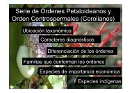 Serie de Órdenes Petaloideanos y Orden Centrospermales (Corolianos)
