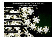 Serie de Órdenes Tetracíclicos