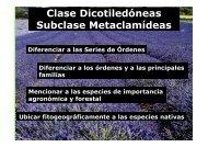 Subclase Metaclamídeas