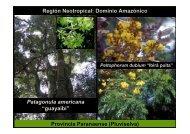 Región Neotropical: Dominio Amazónico Provincia Paranaense ...