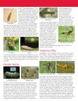 Beneficial Insects of the Home Garden - Page 2