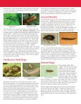 Beneficial Insects of the Home Garden - Page 3