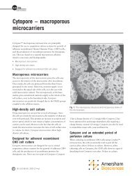 Cytopore – macroporous microcarriers