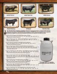 Simmental Sale - Cow Camp Ranch - Page 4