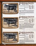 Simmental Sale - Cow Camp Ranch - Page 6