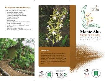 montealto92@costarricense.cr