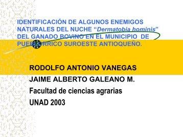 presentación tesis (Dermatobia hominis).pdf