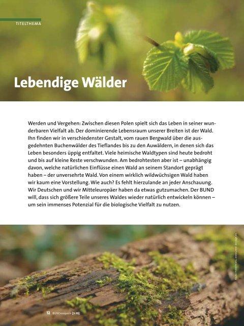 Lebendige Wälder Bund Für Umwelt Und Naturschutz Deutschland