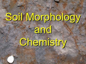 Soil Morphology and Chemistry