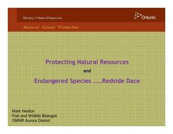 Endangered Species ……Redside Dace