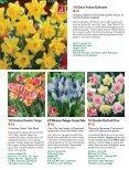 Bulb - Veseys - Page 4