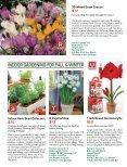 Bulb - Veseys - Page 6