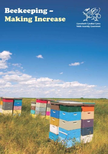 Beekeeping – Making Increase