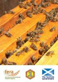 Beekeeping – Making Increase - Page 2