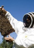 Beekeeping – Making Increase - Page 4