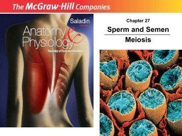 Sperm and Semen Meiosis