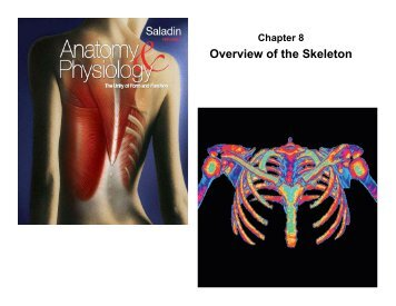 overview of the skeleton 231 overview of the digestive system 61 the functions of the skeletal system by rice university is licensed under a creative commons attribution 40.