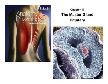 The Master Gland Pituitary