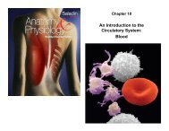 An Introduction to the Circulatory System Blood