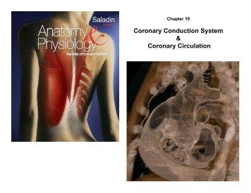 Coronary Conduction System & Coronary Circulation